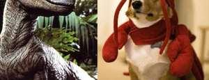 10 vídeos épicos de animales en Internet