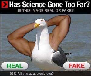 Banner del estilo ¿Real o falsa? Con una mezcla de humano y pájaro