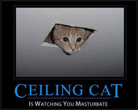 ceiling cat is watching you masturbate gato del techo