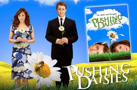 criando malvas pushing daisies
