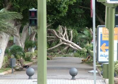 tormenta delta