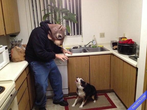Disfraces de Halloween: Ardilla terror perro