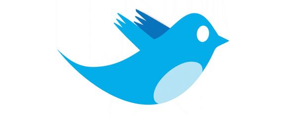 twitter fauna animales pajaros aves