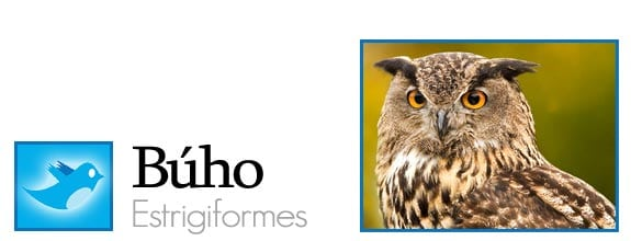 twitter fauna animales pajaros aves redes sociales buho