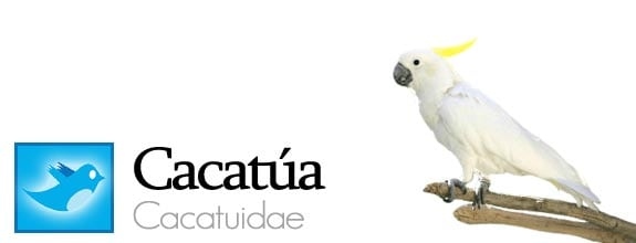 twitter fauna animales pajaros aves redes sociales cacatua
