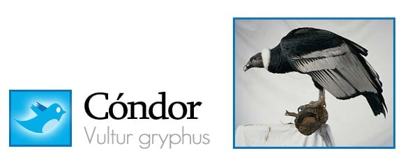 twitter fauna animales pajaros aves redes sociales condor