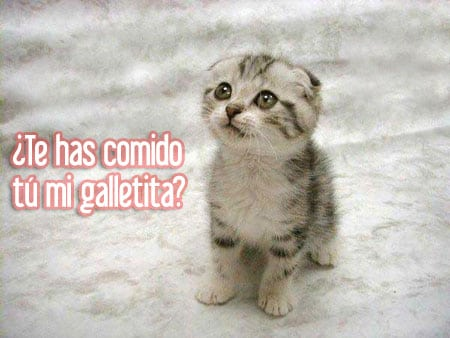 gatito galletita
