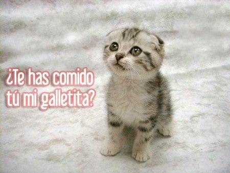 gatito galletita