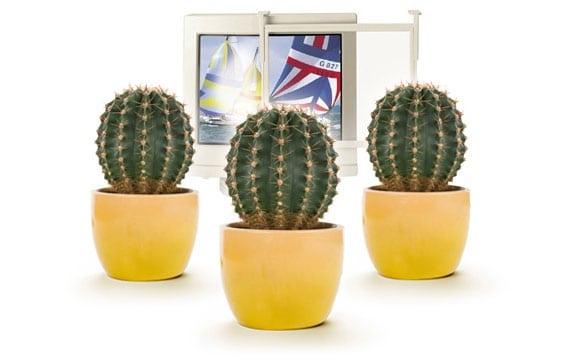 Leyendas urbanas geeks: cactus y filtros anti-radiación