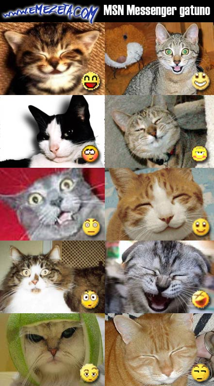 msn messenger cat gatos emoticonos