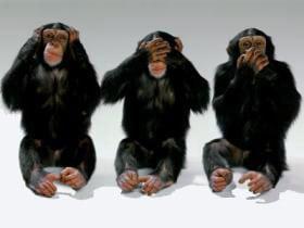 monos monkeys