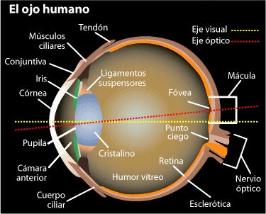ojo punto ciego