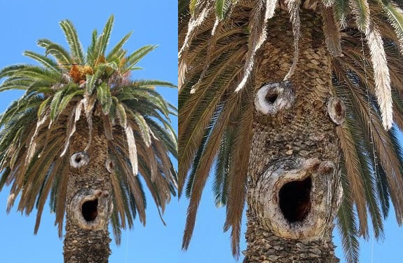 Pareidolia (rostros o figuras en imágenes): Palmera sorprendida