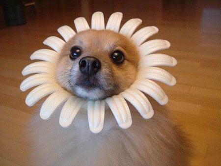 perrito en flor