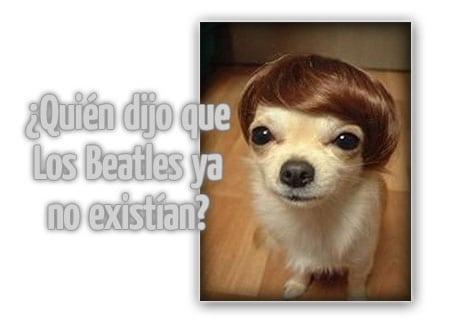 perro beatles peluca dog wig