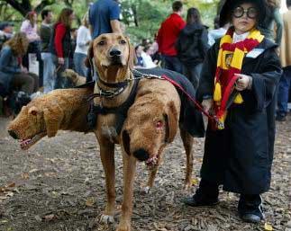 disfraces para perros