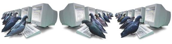 pigeonrank google