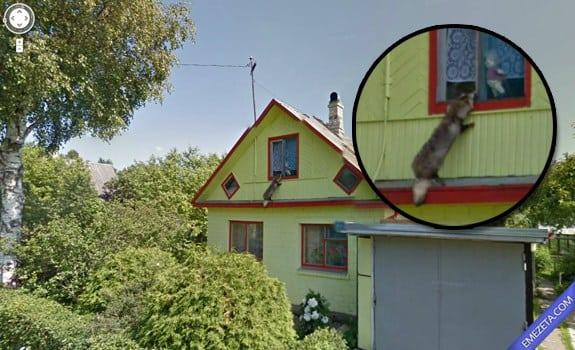 Google Street View: Mapache ladron